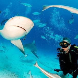 Viaje de buceo a Santa Lucia Cuba