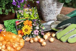 Biogartenversand - Bio-Saatgut