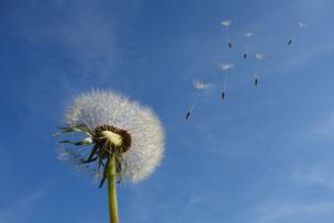 Der Wind der Veränderung oder auf zu neuen Ufern