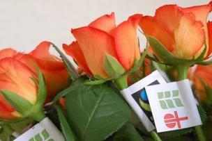 la vendita da rosas ein ina dallas occurenzas en connex cun l'acziun da cureisma