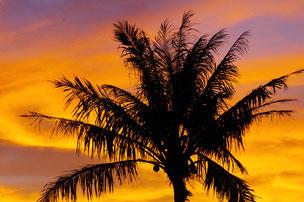 南国の夕暮れヤシの木