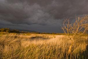 Atardecer  en las Tablas de Daimiel uno de los humedales más amenazados de la Península. Foto M.B.