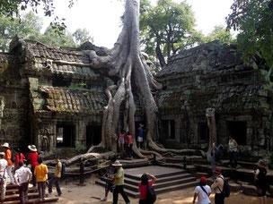 Kombireise Kambodscha Kurzreise mit Bangkok und Baden Khao Lak, Phuket, Koh Samui mit Flug