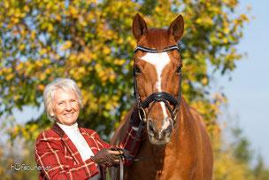 Trakehner Privates Pferdefotoshooting Österreich