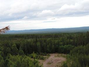 Wald wohin man nur schaut