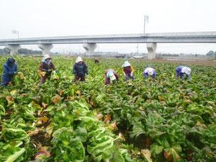 社員で農作業