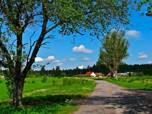 Mittagspause im Schatten der Bäume auf der Fahrt nach Tallin