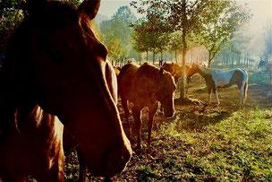ein Paradies für unterschiedlichsten Tierarten