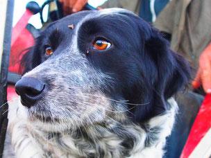 Maurice, der aufmerksame Hund unseres Gastgebers