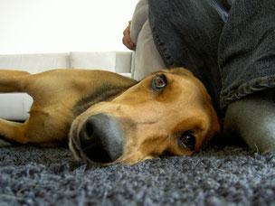 Hundeschule Pfotenglück: Individuelles Training in Regensburg und Umgebung