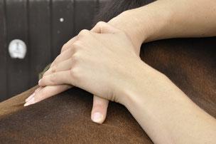 Dorn-Therapie am Pferd