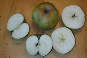 Kanada Renette Apfel