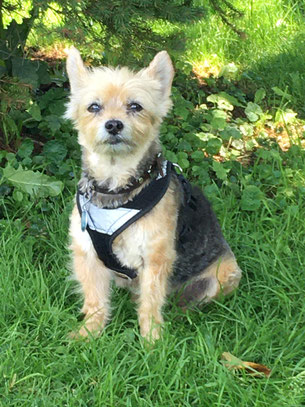 Beispielfoto Tierkommunikation Hund
