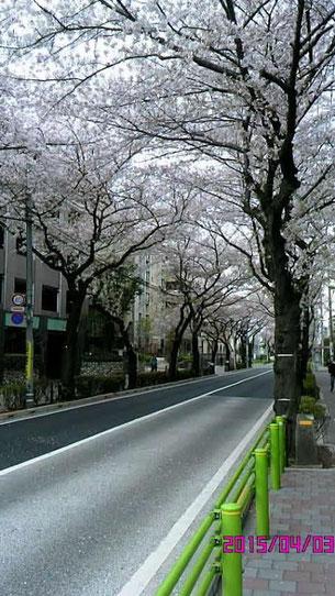 千歳船橋の桜並木道