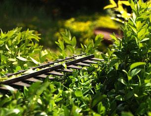 Pflege Schnitt Unterhalt Kletterpflanzen