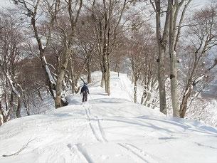 稜線上のブナを楽しんで滑りましょうN村さん