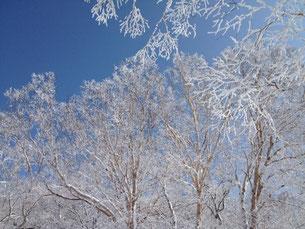 雪をまとった木々と青空