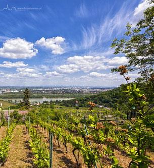 Hotel Vienna - Viennese Wine