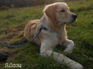 Barney Dunkelblau - in der Hundeschule
