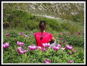 Les pivoines de la Montagne de Thiey (Canaux)