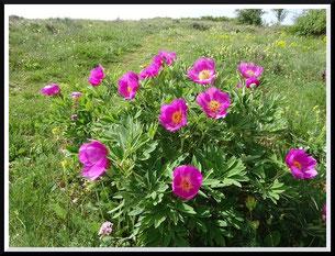 La montagne de Thiey en boucle (Canaux)