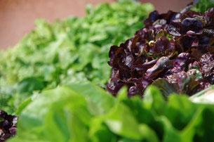 Oder mögen Sie Ihren Salat lieber etwas herber?
