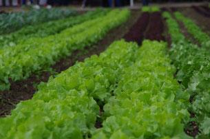 Lecker Salat - nur ein paar Schritte in unseren .......