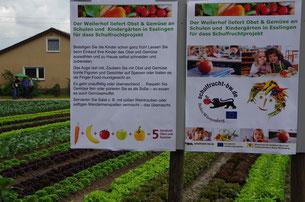 Informationen rund um das Gemüse - für Kinder und Erwachsene