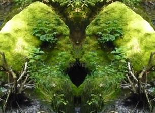 spiegelbild, naturbild, kraftbild