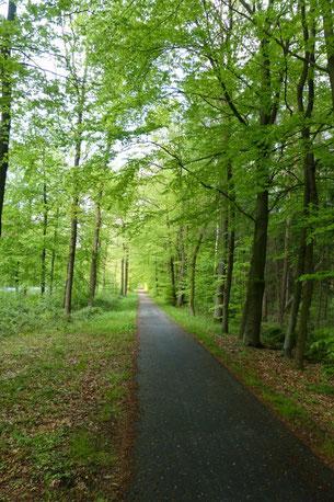 Frühling im Bentheimer Wald
