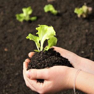 Hochbeet-Befüllung, Hochbeet-Schicht, Gemüseerde, Pflanzerde, Hochbeeterde