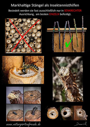 Nisthilfe insect nisting aid Insektenhotel insect hotel markhaltige Stengel Brombeere Rubus Stängel blackberry brambleberry