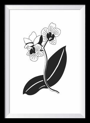 Orchidee Illustration, Zeichnung in schwarz-weiß