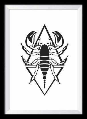 Skorpion Illustration, Zeichnung in schwarz-weiß