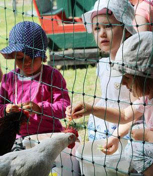 Miethühner im Kindergärten