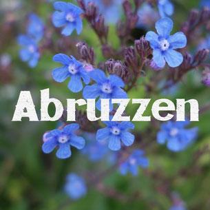 Abruzzen, Apennin, Italien, Blumen, bikepacking