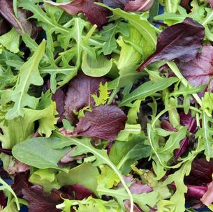 Französisches Salat Saatgut von Ferme de Saint Marthe bei www.the-golden-rabbit.de
