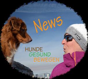 Hunde Gesund Bewegen News