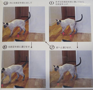猫の歩行パターン(猫とも新聞No73)