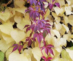 Kraftquelle, Auszeit im Paradies, Herbstbeginn, Baum mit Bank, Herbst in der Wetterau, Herbstmagie