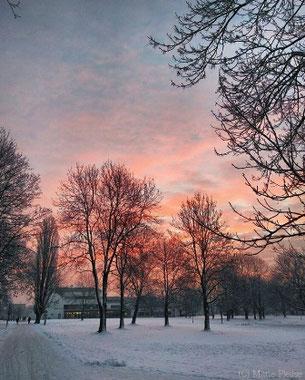 Morgenstimmung auf dem  Campus. (C) Foto: Marie Plesse