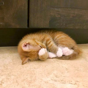Orange kitten curled up on the floor.