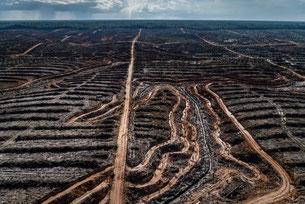 La deforestación en Indonesia da paso a una concesión de aceite de palma. Fotografía: Ulet Ifansasti / Greenpeace