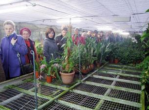 Visite guidée à l'Orchidium, à Fresnes