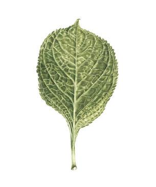 Hydrangea leaf  32,5/23 cm