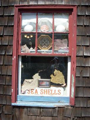 A quaint window featuring an assortment of seashells