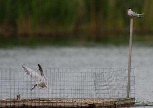 Photo: Natur & Emwelt