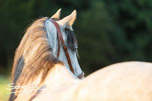 Pferde sind Spiegel unserer Seele                                      (arabisches Sprichwort)