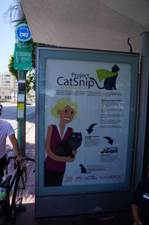 Infotafel zum Catnip Project, hier an einer Bushaltestelle
