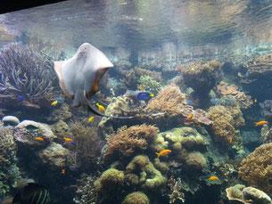 Aquarium im Hagenbeck Zoo
